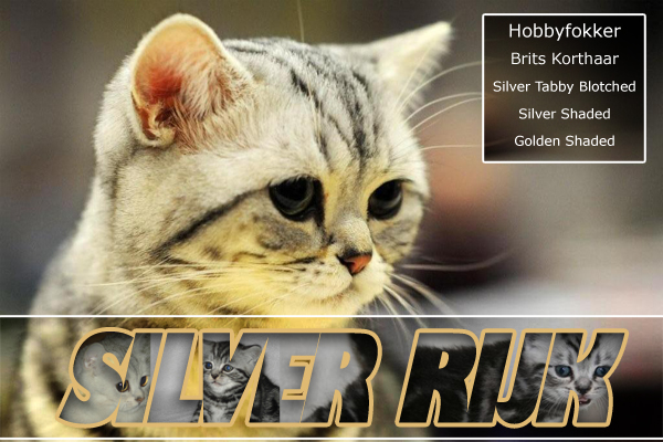 Silver Rijk Cattery